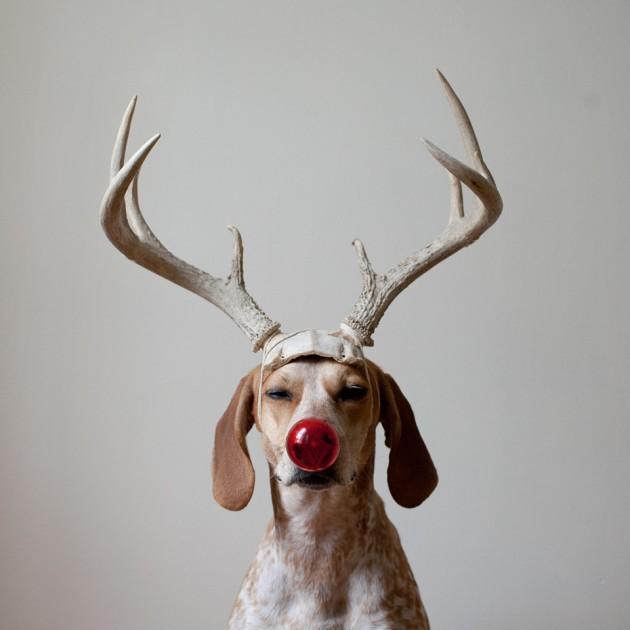 Maddie_Deer2